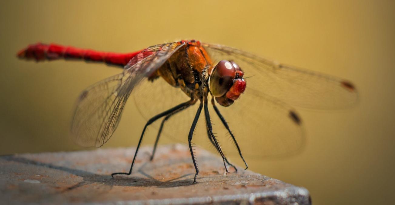 """內部衝突後,Google 大陸審查版搜索引擎""""蜻蜓""""飛走了"""