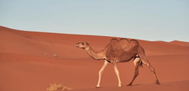 十年来首个主要版本Apache Camel 3.0.0