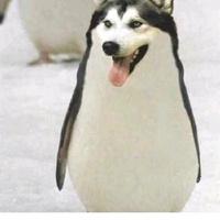 不败的米fk一只企鹅狗