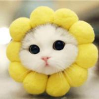 sunny小喵
