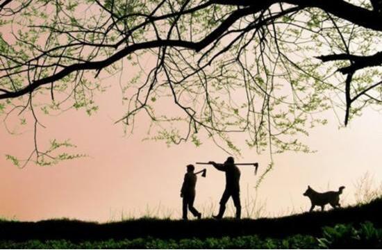 温柔的悲悯-《乡土中国》的优秀读后感范文3600字
