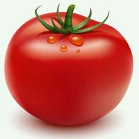 西红柿未来